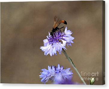 Canvas Print featuring the photograph Flower Meal by Tamera James