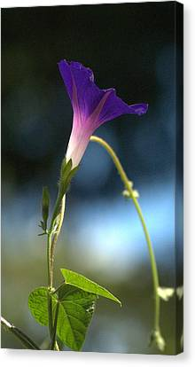 Canvas Print featuring the photograph Flower by Michael Dohnalek