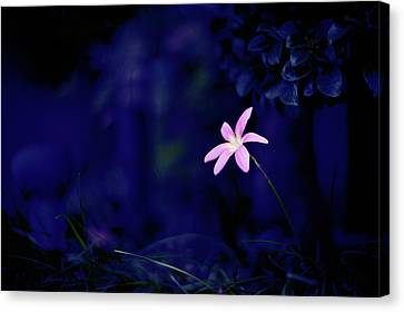 Flower Canvas Print by Moaan