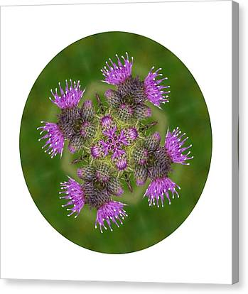 Canvas Print featuring the photograph Flower Of Scotland by Lynn Bolt