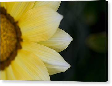Out Of The Woods Canvas Print - Flower Petals by Keith Levit