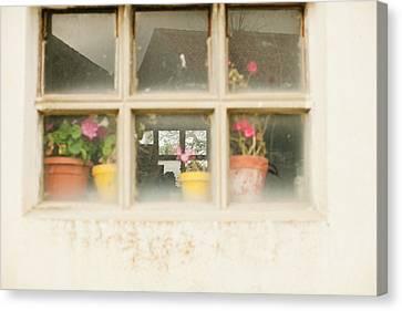 Flower Pots Canvas Print by Ariane Moshayedi