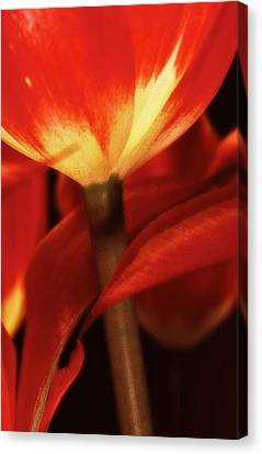 Canvas Print featuring the photograph Flower Still 3 by Thomas Born
