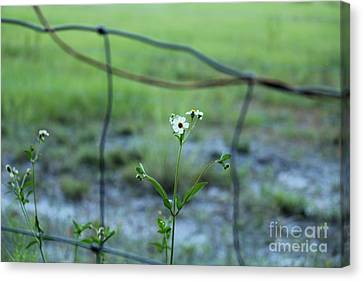 Flower Through The Fence Line Canvas Print by Theresa Willingham