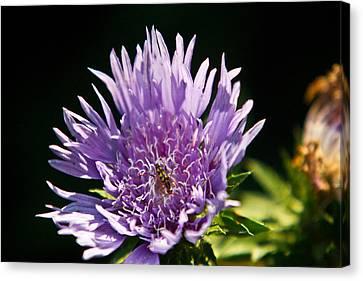 Flowered Beetle Canvas Print by Douglas Barnett