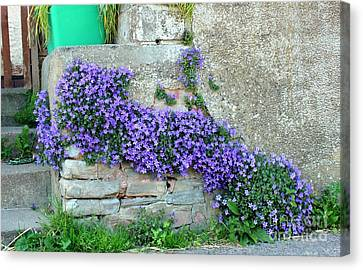Flowered Steps Canvas Print by Rene Triay Photography