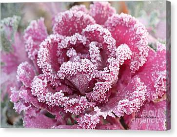 Canvas Print featuring the photograph Flowering Cabbage by Yumi Johnson