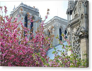 Flowering Notre Dame Canvas Print by Jennifer Ancker