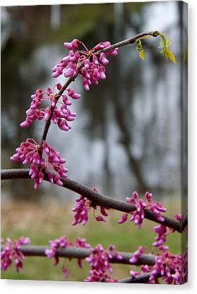 Canvas Print featuring the photograph Flowering Tree 1 by Gerald Strine