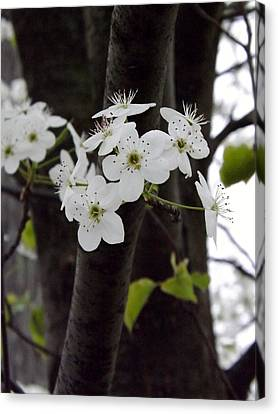 Canvas Print featuring the photograph Flowering Tree 4 by Gerald Strine