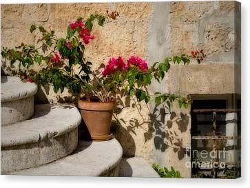 Flowerpot On Stairs In Kocura Croatia Canvas Print
