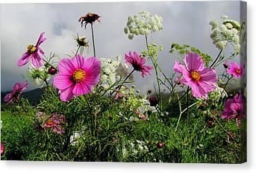 Flowers Canvas Print by Barbara Walsh