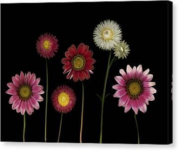 Flowers Canvas Print by Deddeda