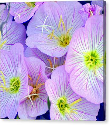 Flowers Flowers Canvas Print by Marty Koch