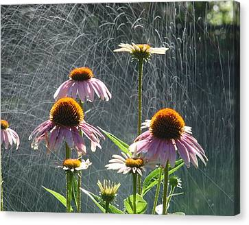 Flowers In The Rain Canvas Print by Randy J Heath