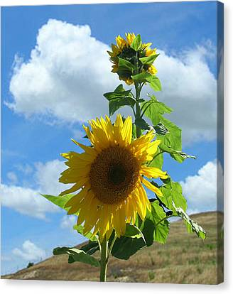 Canvas Print featuring the photograph Flowers In The Sun by Bonnie Muir