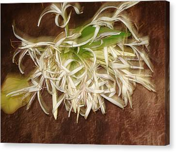 Flowers Canvas Print by Indrani Moitra