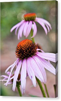 Kobe Canvas Print - Flowers by invisibleA