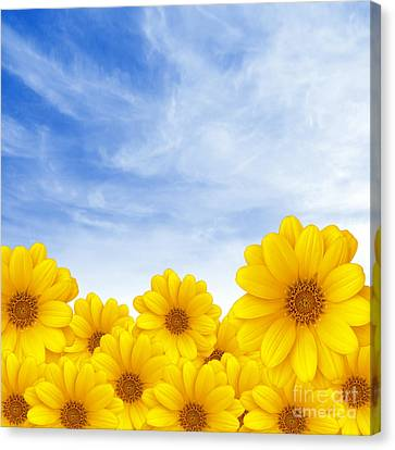 Flowers Over Sky Canvas Print by Carlos Caetano