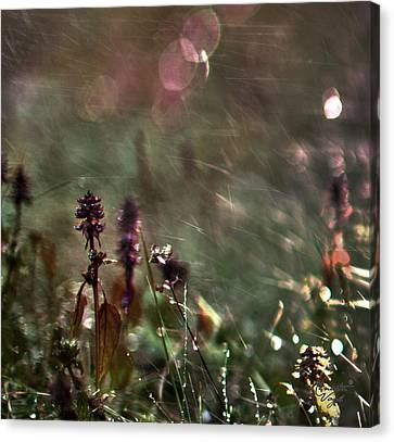 Flowers Canvas Print by Renata Vogl