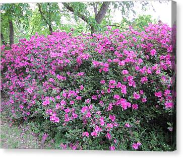 Canvas Print featuring the photograph Flowers by Shawn Hughes