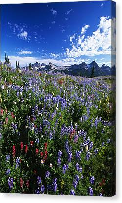 Flowers With Tattosh Mountains, Mt Canvas Print