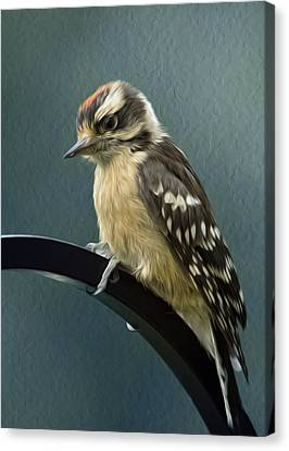 Flowing Downy Woodpecker Canvas Print by Bill Tiepelman