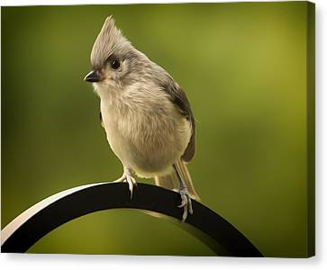 Flowing Tufted Titmouse Canvas Print by Bill Tiepelman