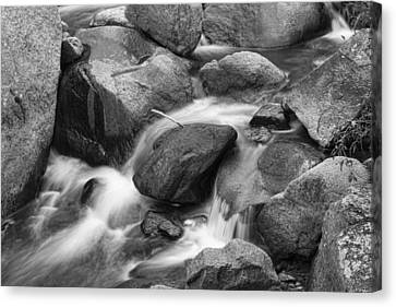 Flowing Water Down The Colorado St Vrain River Bw Canvas Print by James BO  Insogna