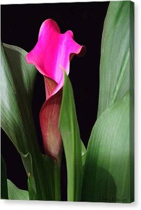 Fluent Calla Lily Canvas Print by Debra     Vatalaro