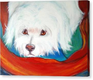 Fluffy Friend Canvas Print by Jacqui Mckinnon