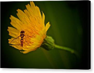 Fly On A Flower Canvas Print