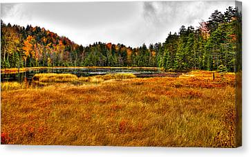 Fly Pond On Rondaxe Road Canvas Print by David Patterson