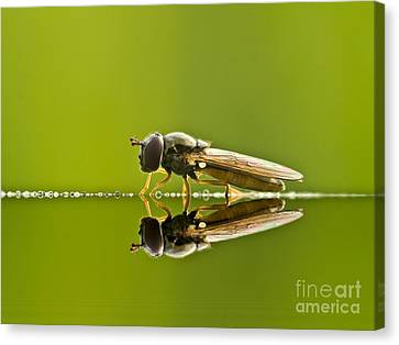 Fly Reflection Canvas Print by Odon Czintos