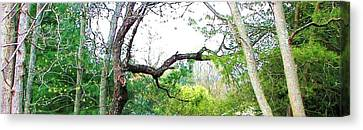 Canvas Print featuring the photograph Flying Branch by Pamela Hyde Wilson