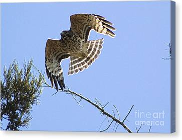 Canvas Print featuring the photograph Flying High by Johanne Peale