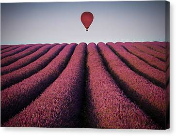 Flying High Canvas Print by Paul Baggaley