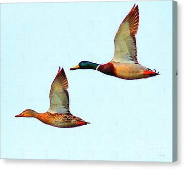 Flying Mallards Canvas Print by Wingsdomain Art and Photography