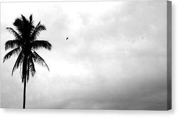 Flying-off From Palm Tree Canvas Print by Rosvin Des Bouillons