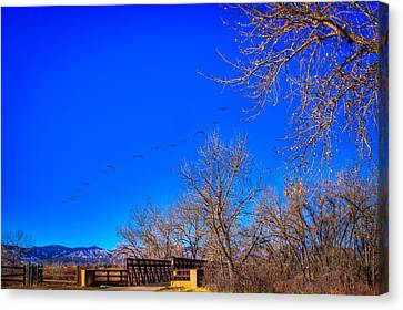 Flying Over South Platte Park Canvas Print by David Patterson