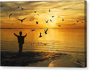 Flying Seagull With Silhouette Canvas Print by Kam