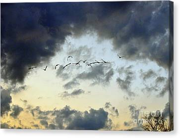 Flying South For The Winter Canvas Print by Paul Ward