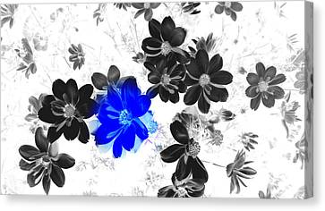 Focal Black And White Beauty Canvas Print by Kim Galluzzo Wozniak