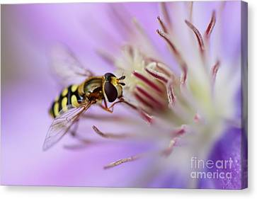 Focussing Canvas Print by LHJB Photography