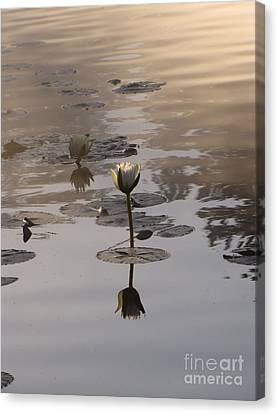 Fog And Reflections Canvas Print by Michelle H