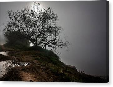 Canvas Print featuring the photograph Fog Day by Edgar Laureano