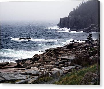 Fog In Acadia Canvas Print by Skip Willits