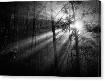 Foggy Forest Canvas Print by Matt  Trimble