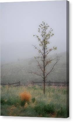 Foggy Morning Canvas Print by Amee Cave
