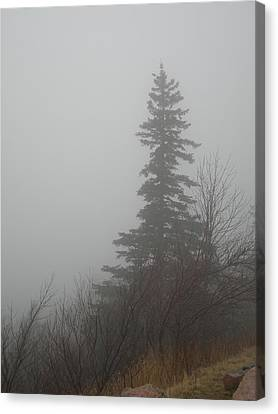 Foggy Sentinel Canvas Print by Skip Willits